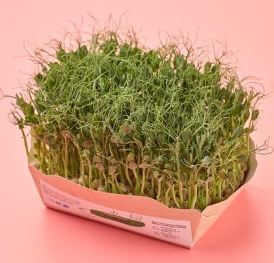 Микрозелень гороха